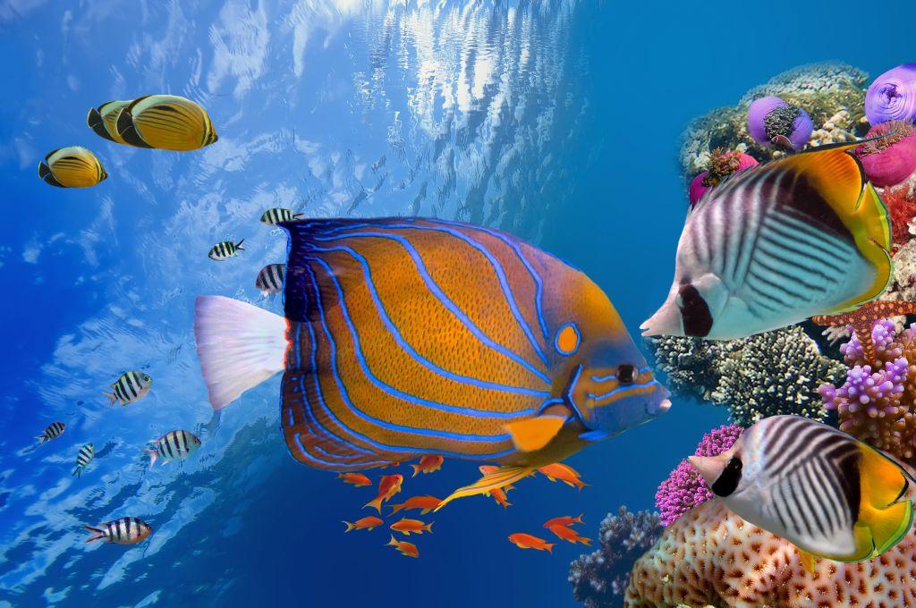 Bunte Unterwasserwelt mit Fischen