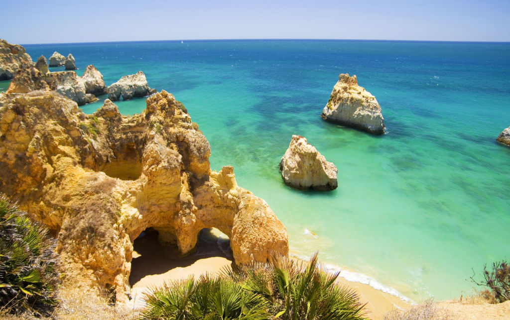 Algarve, Alvor, Bush