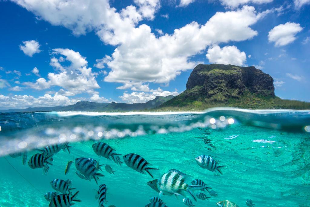 Fische im Ozean vor Felsformation auf Mauritius