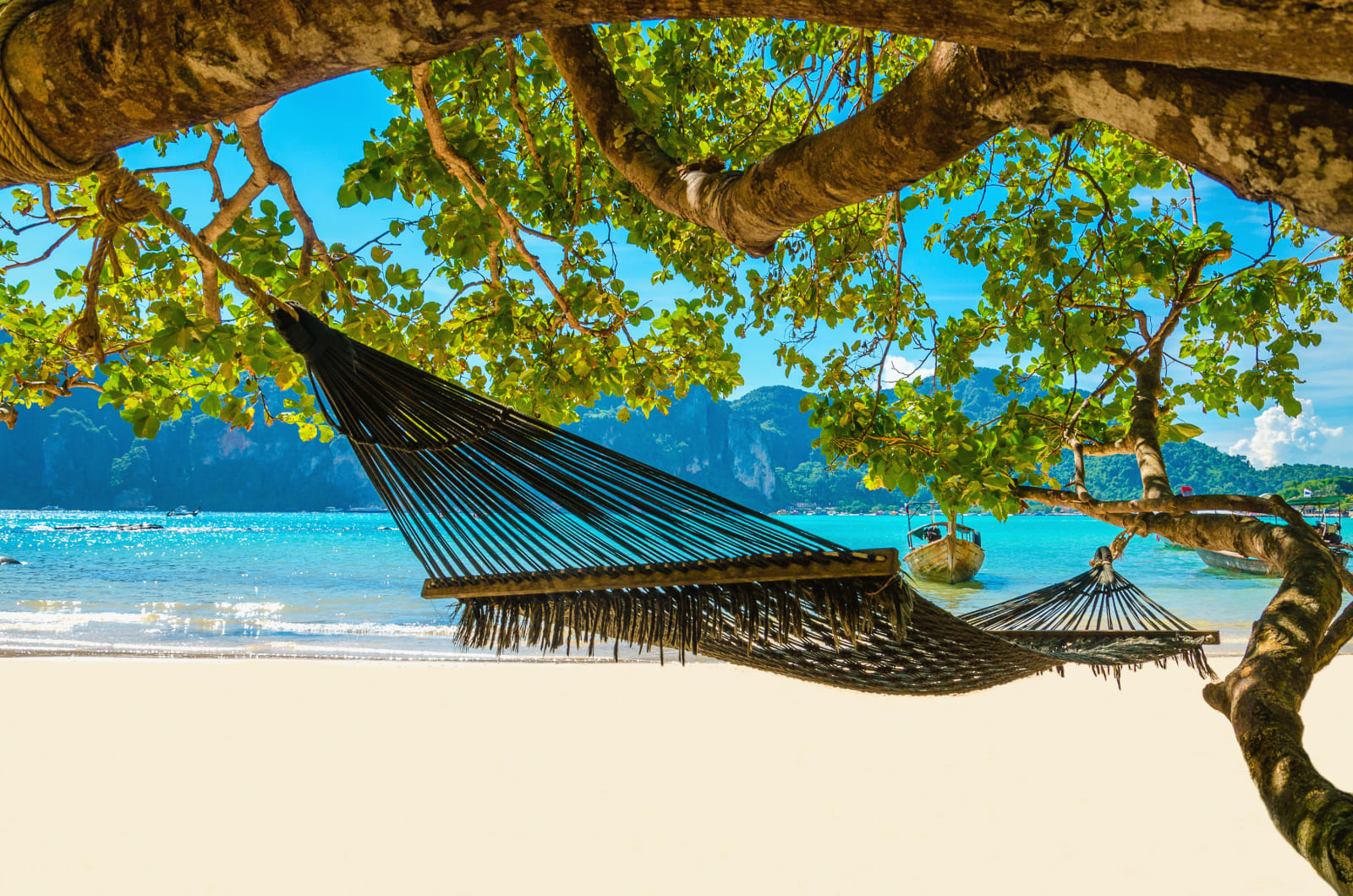 Un hamac sur un palmier en Martinique