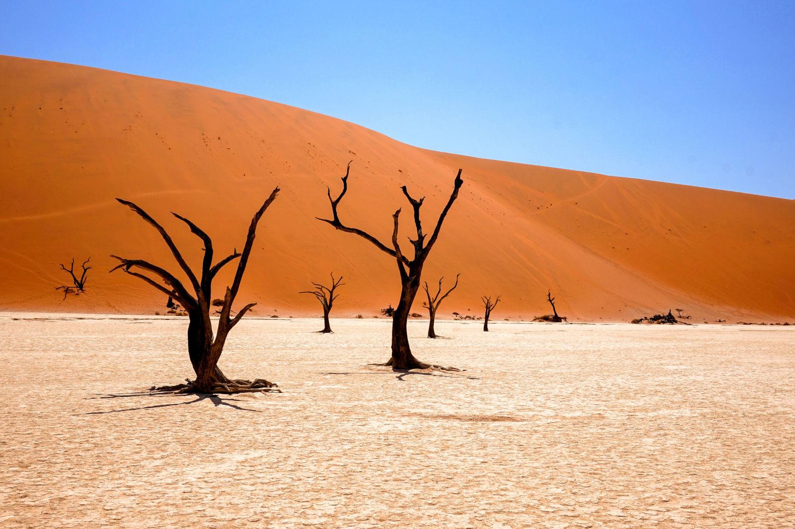 Tote Bäume im Dead Vlei, Namibia