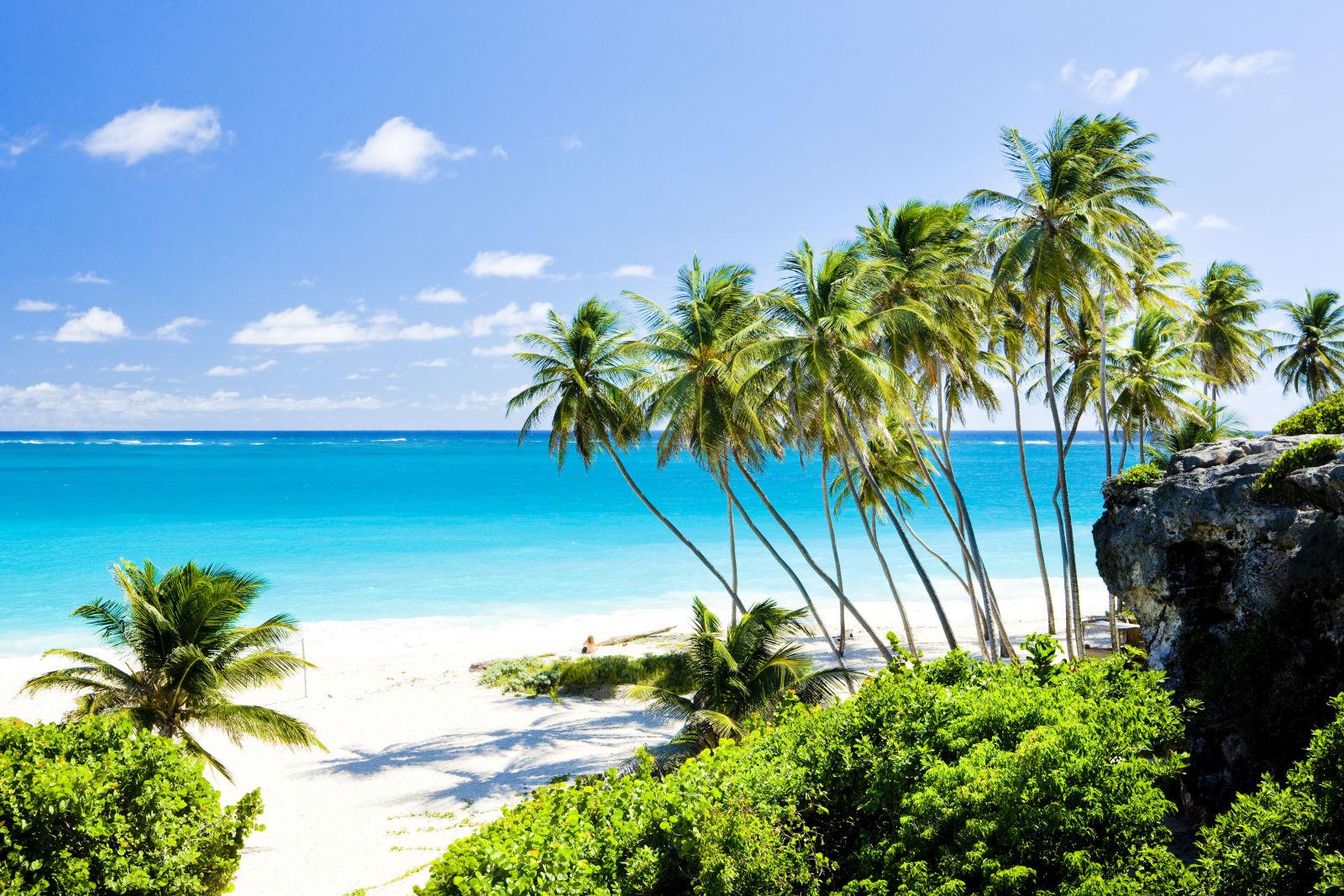 Barbados Palmen Meer Strand