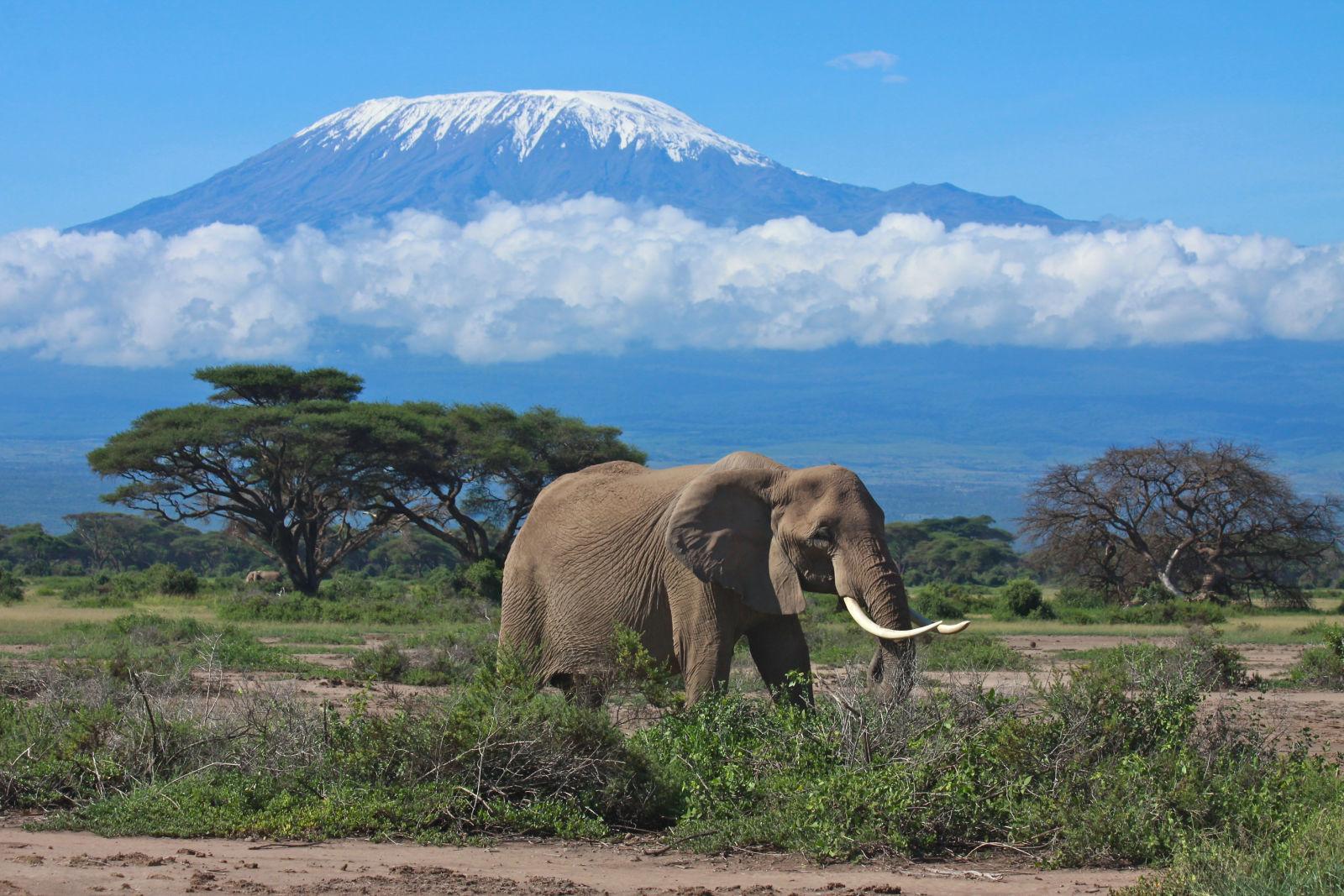 Africa, Animal, Cloud