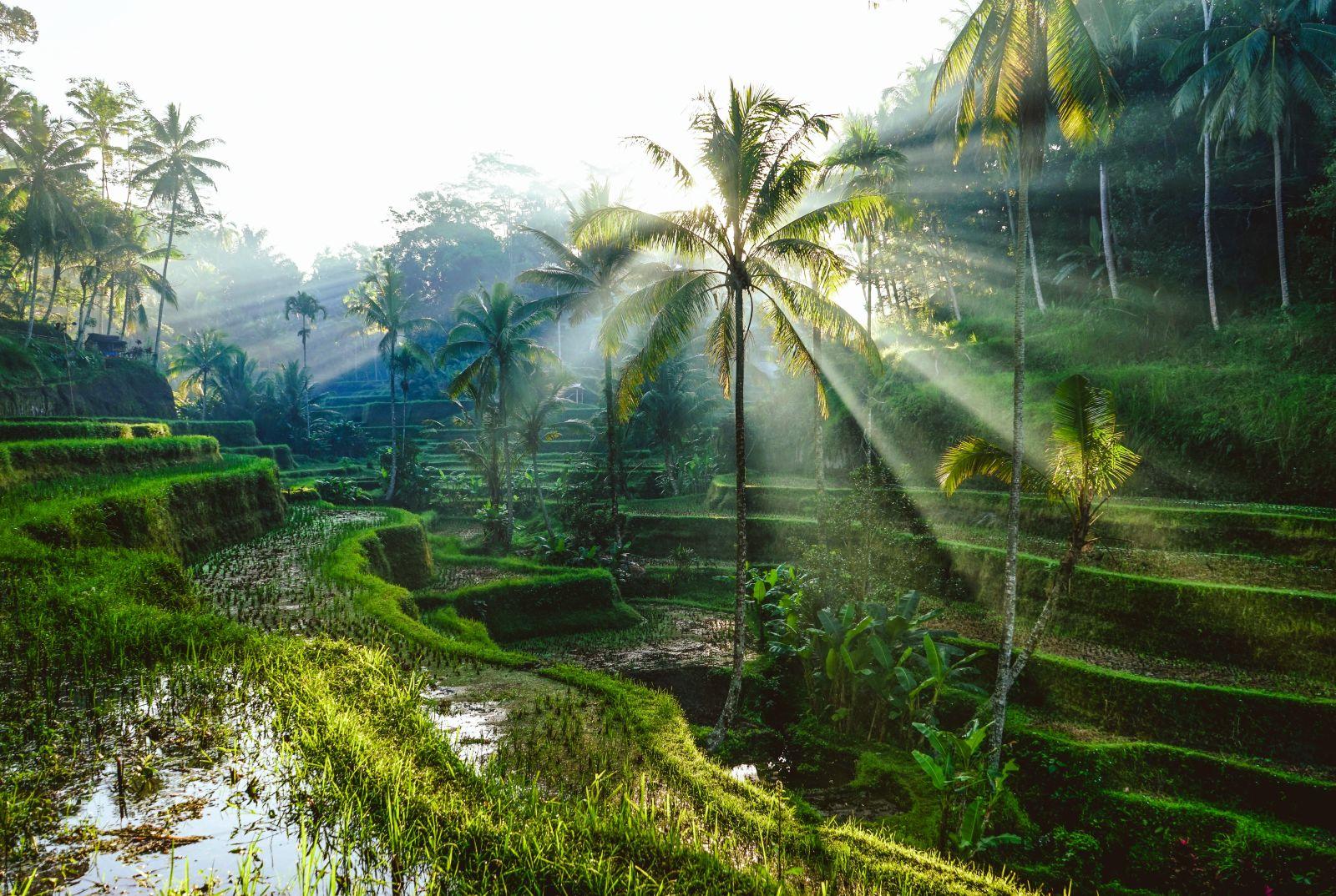 Une forêt à Bali
