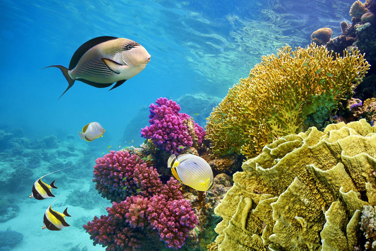 Unterwasserwelt von Marsa Alam in Ägypten
