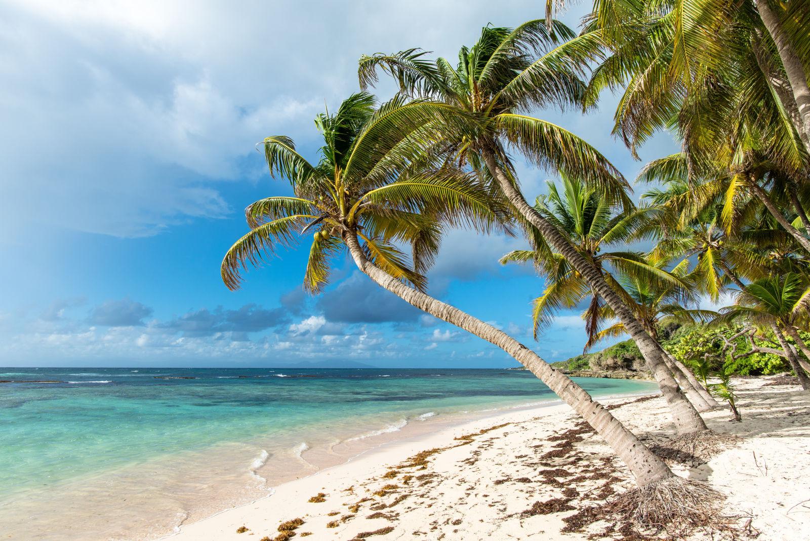 Marie-Galante Guadeloupe Strand Meer Palmen