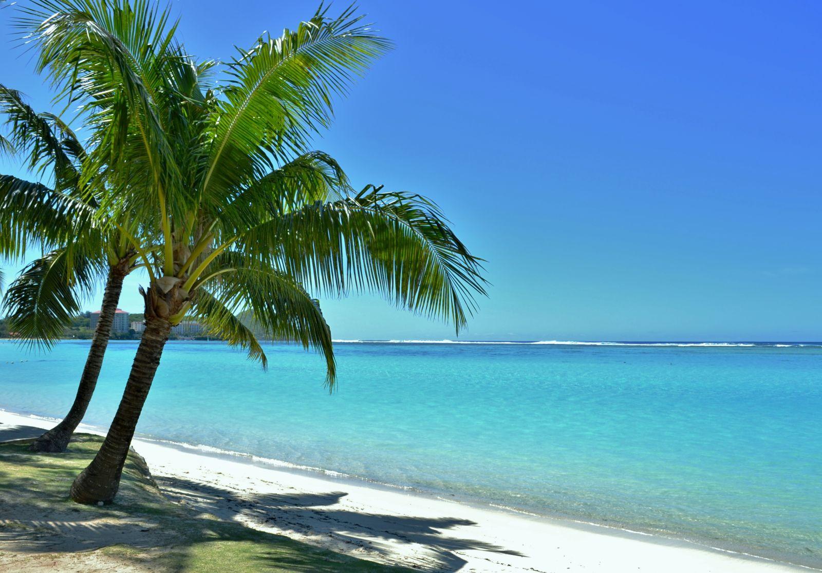 Guam, Oceania, Palm Tree