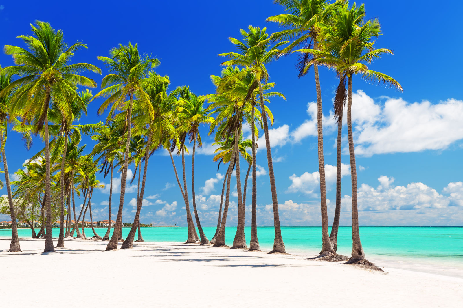 Kokospalmen am weißen Sandstrand in Punta Cana, Dominikanische Republik