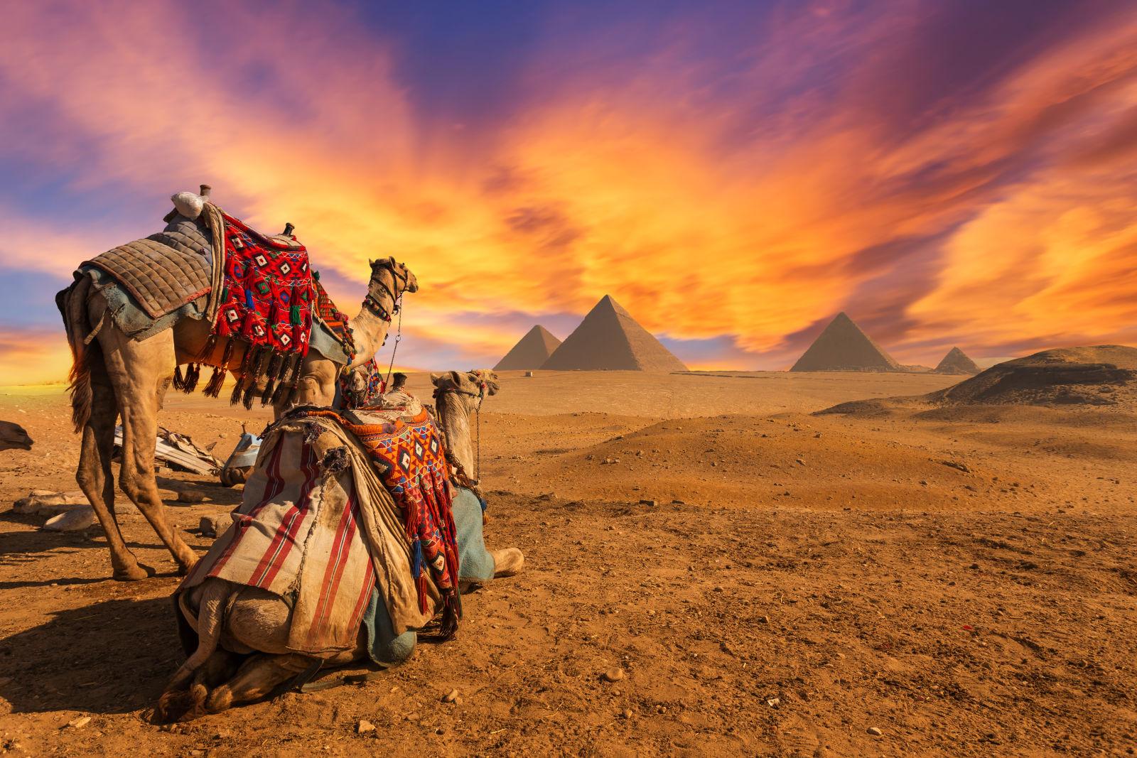 Zwei Kamele in der Wüste schauen auf die Pyramiden, Cairo, Ägypten
