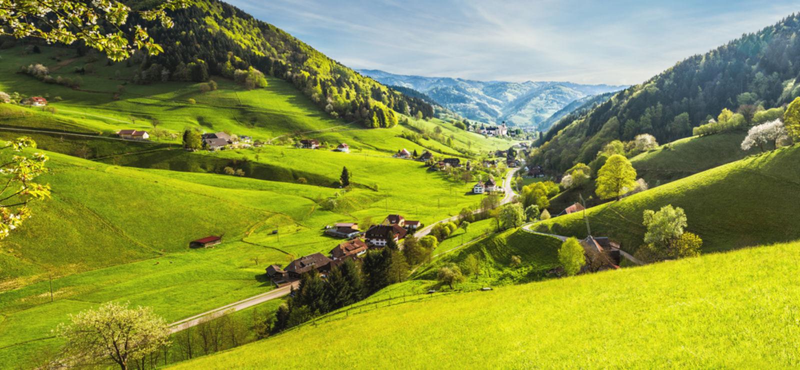 Schwarzwald view