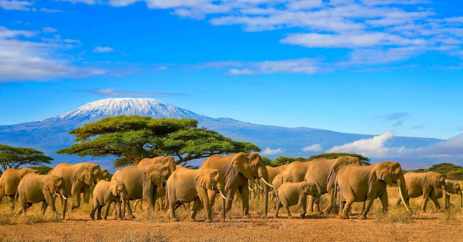 Kenia Kilimandscharo with Elephants