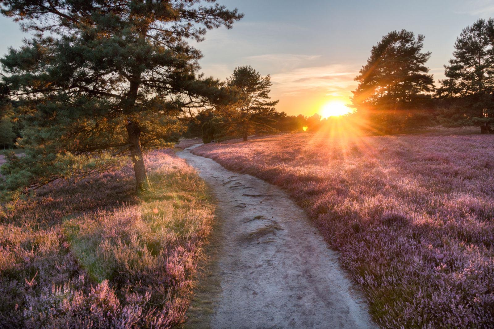 Sonnenuntergang in der Lüneburger Heide in Niedersachsen
