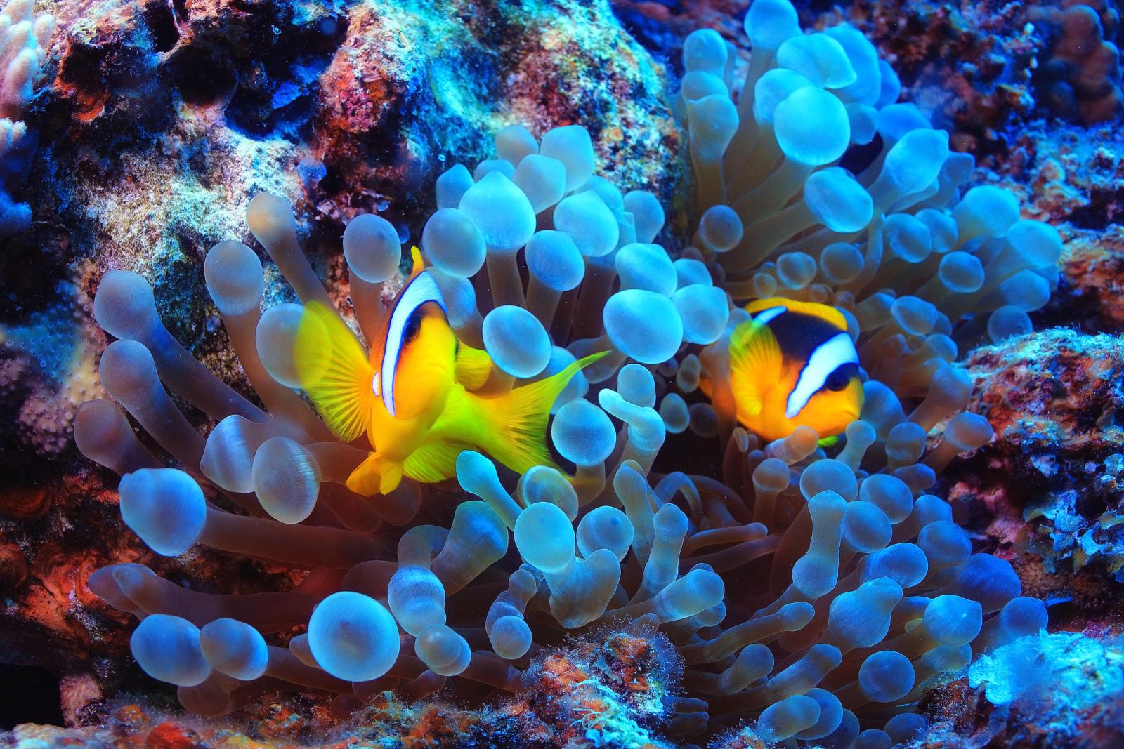 mediavault_images/Great_Barrier_Reef_AdobeStock_101285692_rxcpym