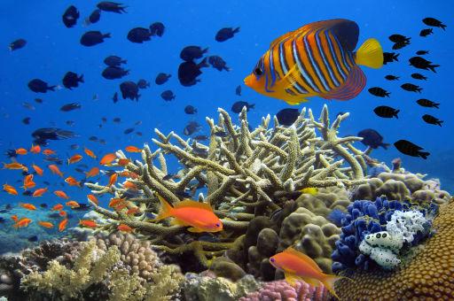 Prezzi in calo per una vacanza a Sharm!