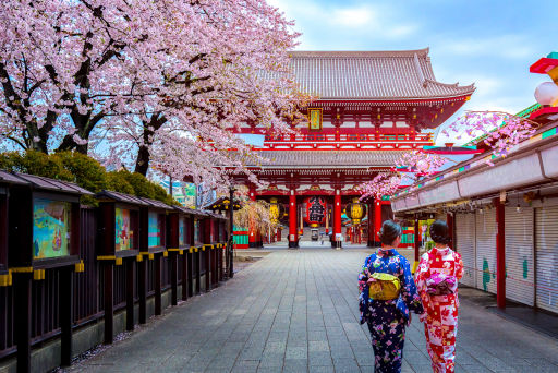 Fly to Tokyo in 2022 for Cherry Blossom Season