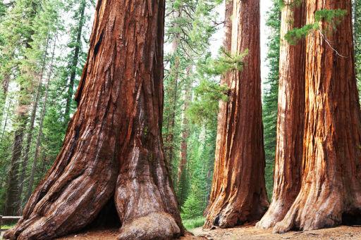USA: ultimate California road trip