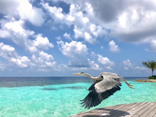 Flexibel und günstig auf die Malediven