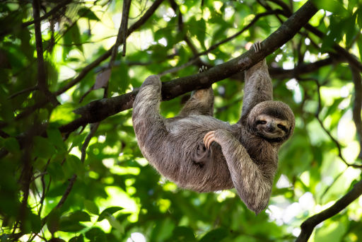 Did you know there's a retirement home for sloths?