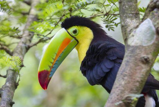 Nonstop nach Costa Rica