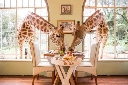 Vacation at the Giraffes Residence in Kenya!