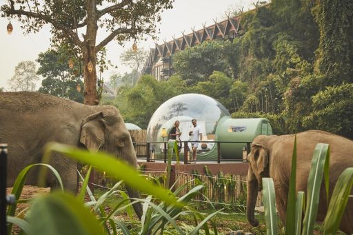 Sleep under the stars in a Jungle Bubble with wild elephants in Thailand