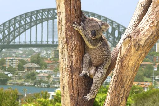 Stay in a Wildlife Retreat in Sydney