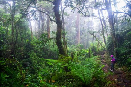 Dschungel-Abenteuer Costa Rica: Glühende Vulkane und tiefgrünes Paradies