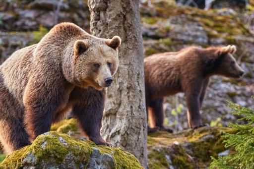Slowakei Roadtrip: Berge, Bären & Glamping-Adventure