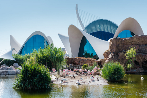 Visita al Oceanogràfic de Valencia + hotel 4*