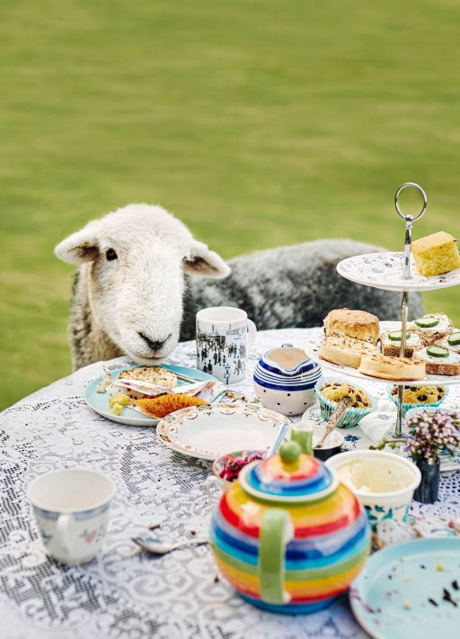 Enjoy afternoon tea with some cute but naughty sheep near Glasgow!