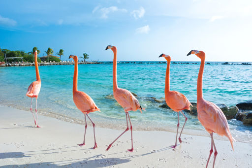Bargain Nonstop Aruba Flights