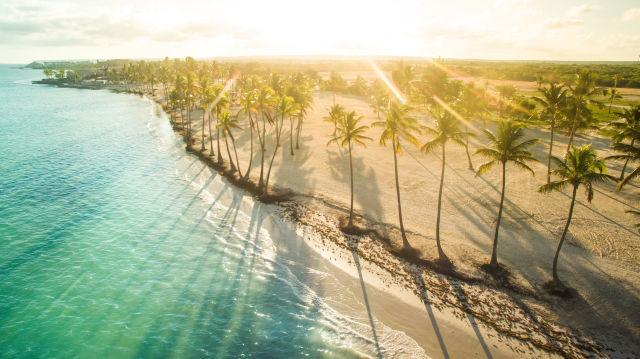 Domenikanische Republik Anreise Blick auf Palmen Sonne