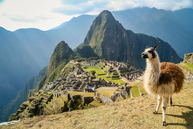 Animal, Cusco, Llama