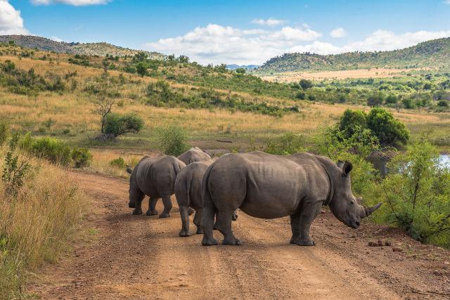 Afrika Südafrika Nashorn Natur