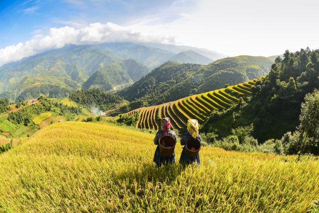 Reisterrassen im Norden Vietnams