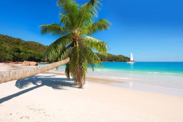 Strand mit Palme auf den Seychellen
