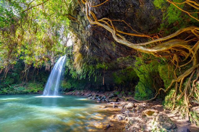 Branch, Hawaii, Maui