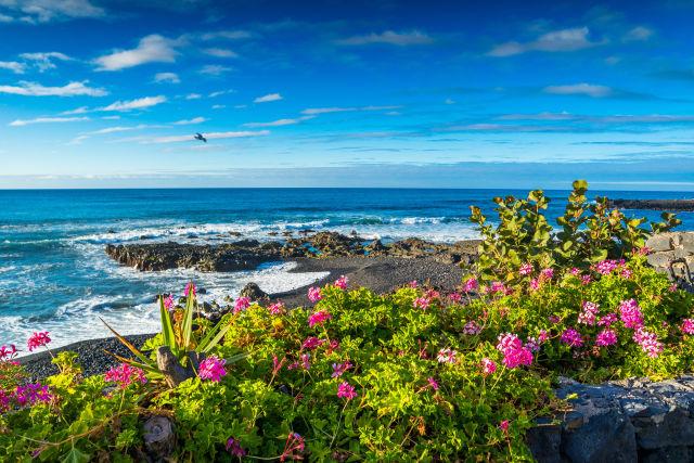 Canary Islands, Europe, Santa Cruz de Tenerife