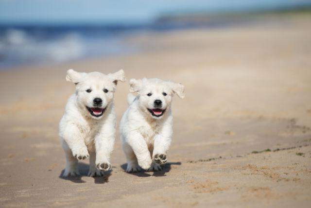 beach, Dog, Dogs