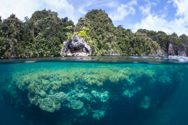 Tauchurlaub in Raja Ampat in Indonesien mit Riff