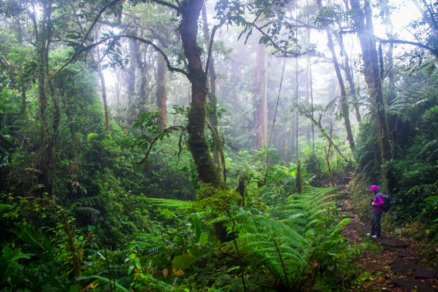 Impressions and Other Assets/H-SEO-SEA-shutterstock_1144769675-monteverde-nationalpark_caqxnt