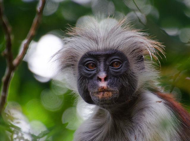 Animal, Baboon, Botany