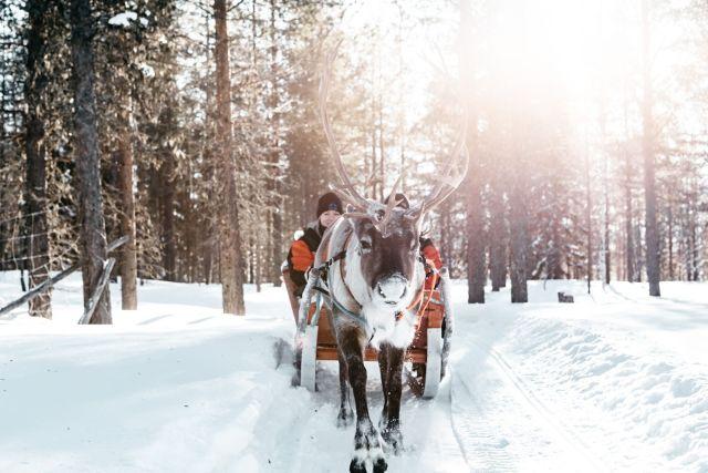 Rentierschlitten im Schnee in Lappland