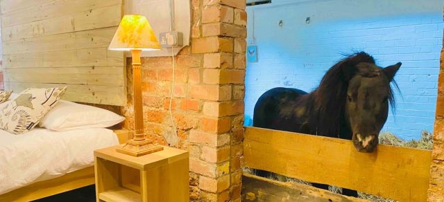 airbnb, Horse, minihorse